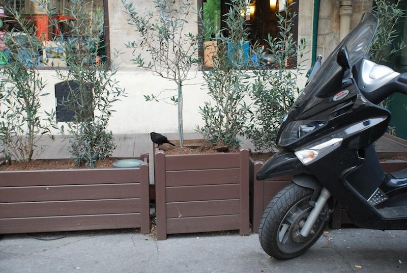 rue du Roi de Sicile-bird-180311