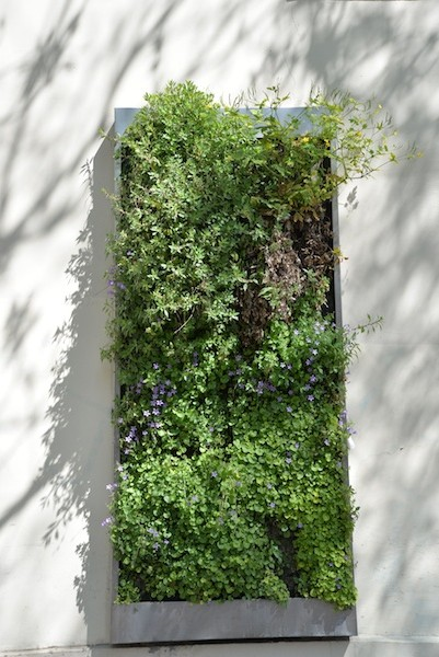 avenue parmentier-DSC_0948-c'sibon greenery-resized-230415